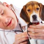 ACTION! Petizione per un ospedale pubblico veterinario