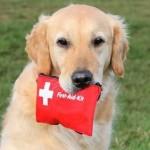 Come preparare un kit d'emergenza per cani e gatti