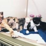 Scarlett, la mamma gatta eroina che salvò i suoi figli da un incendio