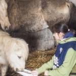 Nuova vita per gli animali del maneggio di Santarcangelo