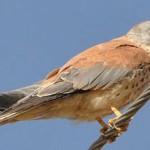 """Lipu e Wwf all'Europa: """"Salvare la biodiversità"""". Il dossier"""
