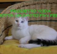 progetto yoda fiv felv