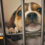 Animali: 130 mila abbandoni l'anno. Una petizione Lav