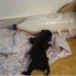 Idea per allattare  cuccioli orfani