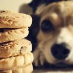 Facciamo in casa golosi biscotti per cani