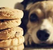 cane biscotti