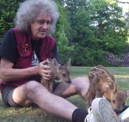 Brian-May-with-animals_BrianMay.com_