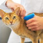 L'Anagrafe nazionale felina, cos'è e a cosa serve