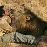 Kevin, l'uomo che sussurra ai leoni [Gallery]