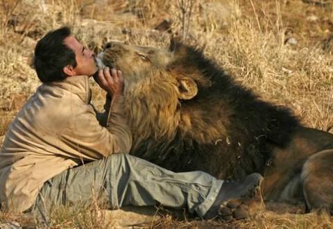 Kevin l 39 uomo che sussurra ai leoni gallery - Un letto di leoni ...