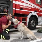 Se avvisti un incendio dai l'allarme e salva gli animali
