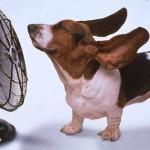 Come proteggere gli animali dal caldo