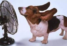 caldo_cani-e-gatti