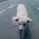Animali in strada: numeri utili