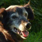 Banca dati di longevità e invecchiamento animale
