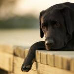Come ritrovare un cane smarrito