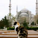 La leggenda di Maometto e della gatta Muezza