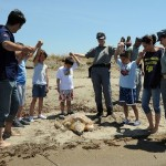 La tartaruga Fourmoreyears torna in libertà