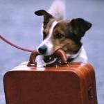 Ue/Nuovo passaporto per cani, gatti, furetti