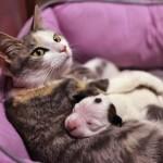 Noland, cucciolo di pitbull adottato da mamma gatta