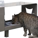 Due progetti di design per i gatti di Firenze