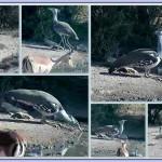 Webcam sugli animali della Mashatu Game Reserve