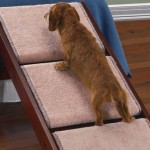 La rampa per aiutare i pets a salire sul letto o sul divano