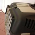 Consiglio per mettere in sicurezza il gatto nel trasportino
