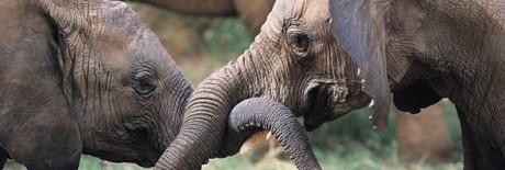 lav elefanti