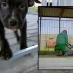 ACTION! Stop alla soppressione dei cani in Danimarca