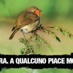 Incidenti di caccia: dal 1° settembre 5 morti e 28 feriti