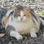 L'obesità colpisce anche cani e gatti