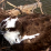 osprey maryland
