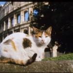 Enpa offre aiuto ai gatti di Roma