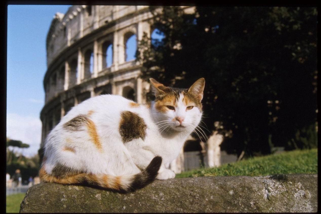 Rete Per Gatti Condominio gatti in condominio tutelati come gli uccelli sugli alberi