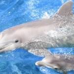 """""""Sos delfini"""", tutte le violazioni di legge in un'investigazione Lav"""