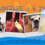 """""""Vacanzebestiali"""", l'app per un'estate a quattro zampe"""
