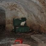 Sequestrati 23 gatti tenuti in pessime condizioni nell'aquilano