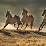 I cavalli selvaggi in una poesia di Byron