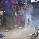 ACTION! Petizione per i gatti massacrati in Perù. (Urgente)