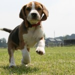 La norma restringi-vivisezione è ora legge