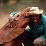 Adotta a distanza un elefantino orfano