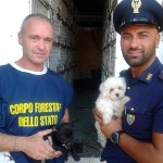 Salvati 106 cuccioli di cane importati illegalmente dall'Est Europa