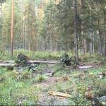 Webcam in un bosco con tanti animali in Estonia