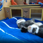 Webcam su gattini. Second Chance Rescue Kitten Cam
