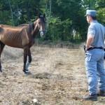 Sequestrato allevamento illegale di cavalli destinati al macello