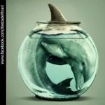 ACTION! No alla riapertura del delfinario di Rimini