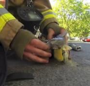 pompiere gatto