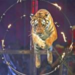 Circo, in 5 anni calano spettacoli e spettatori. I numeri