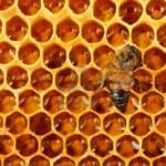 Lo stress da pesticidi provoca il collasso delle colonie di api